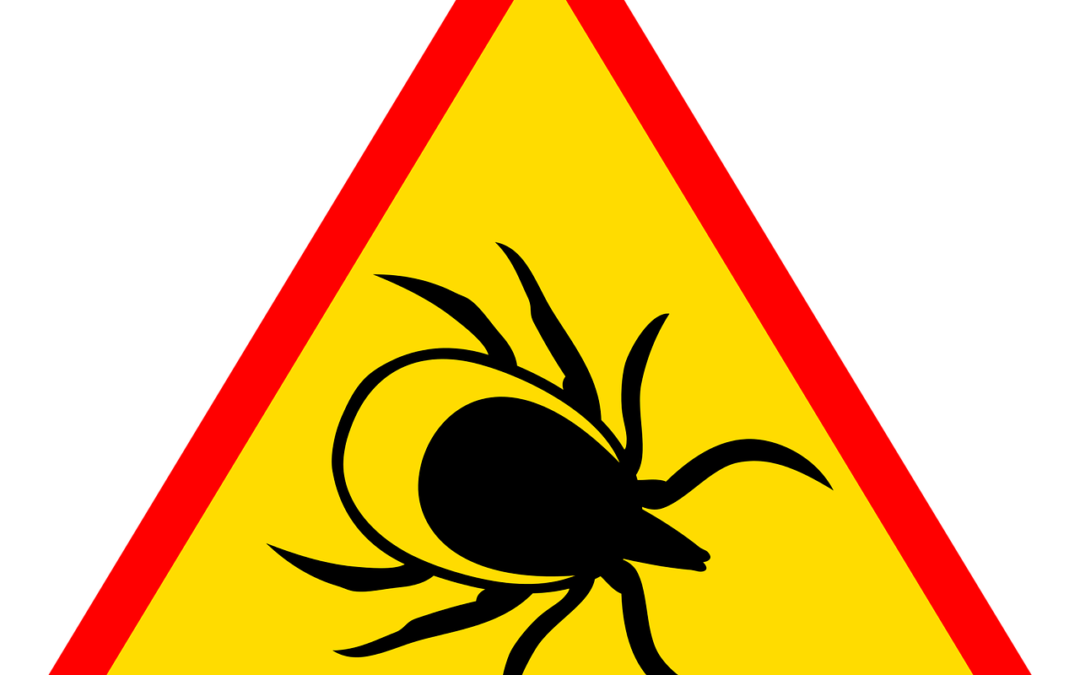 Do You Have Lyme Disease?
